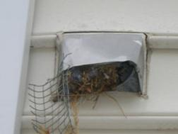 Birds have easy access to vents without a proper bird guard.